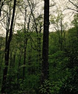 Vineyard Gap Trail