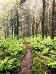 Baxter Creek Trail - fog