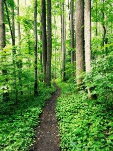 Baxter Creek Trail - foliage