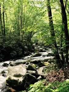 Big Creek Trail - Big Creek