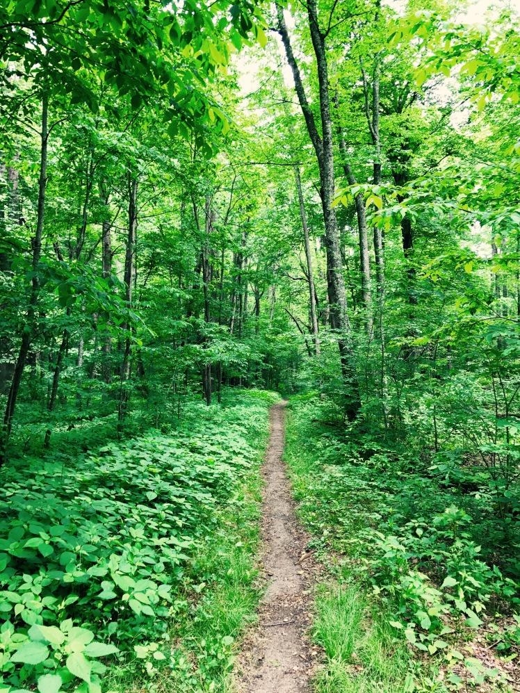 Big Creek Trail - solitary trail in the woods