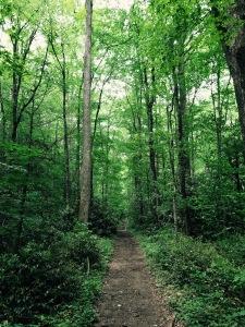 Big Creek Trail - trail