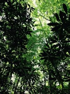 Big Creek Trail - trees