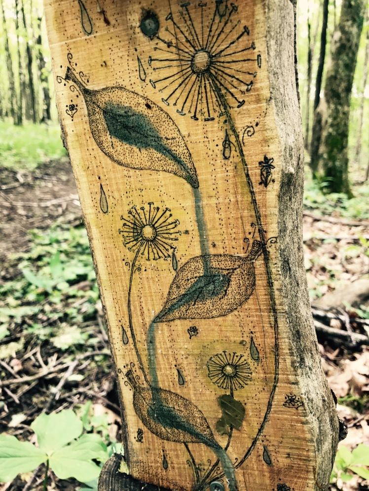 Elk Knob State Park - Beech Tree Trail
