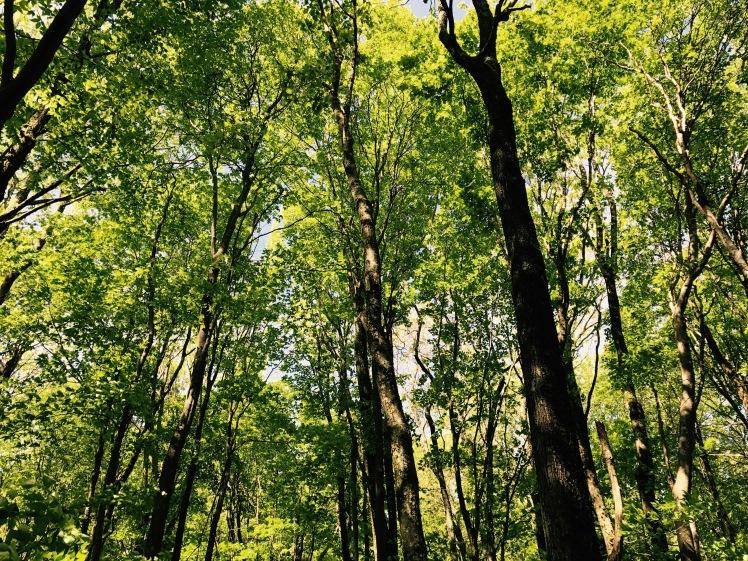 Elk Knob State Park - foliage