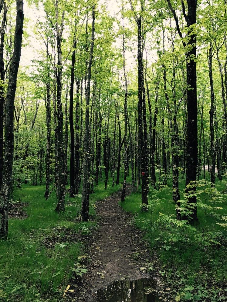 Elk Knob State Park - Maple Run Trail
