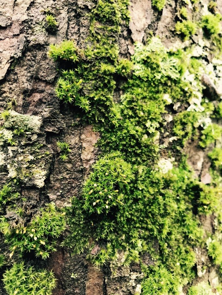 Elk Knob State Park - moss