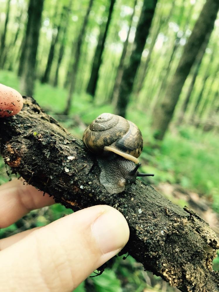 Elk Knob State Park - snail (phot by Emily)
