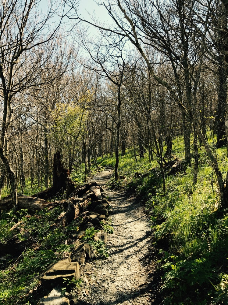 Elk Knob State Park - Summit Trail - trail