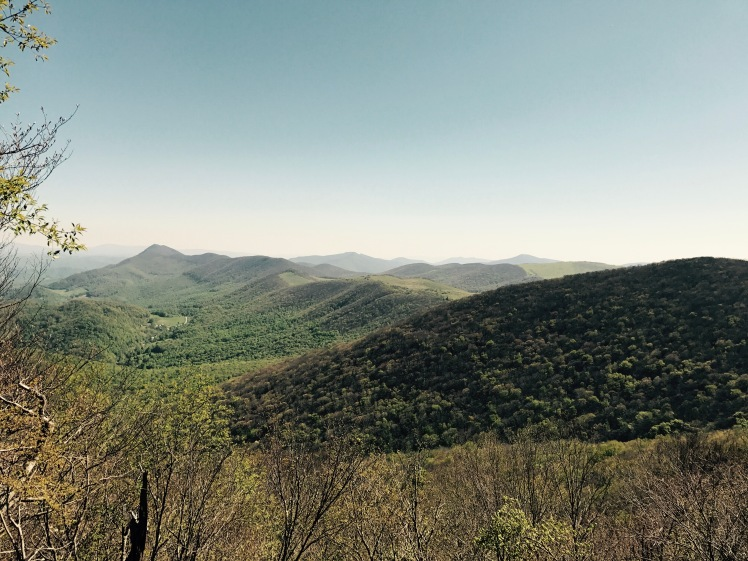 Elk Knob State Park - Summit Trail - vista