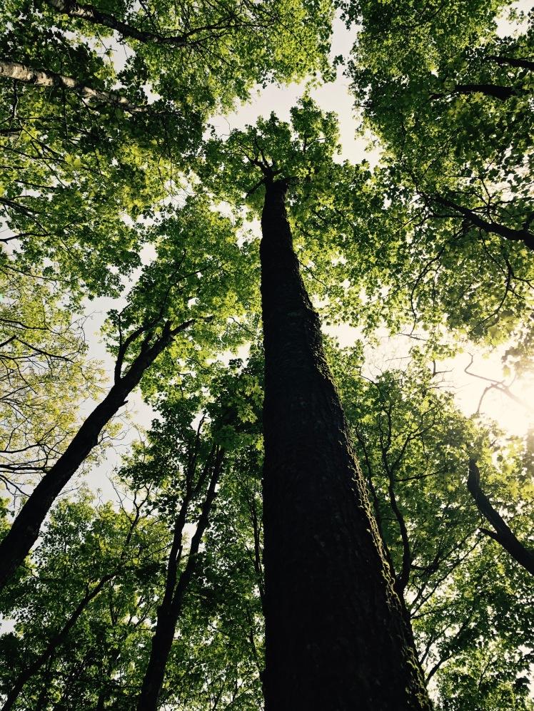 Elk Knob State Park - trees