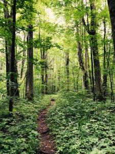 Swallow Fork Trail - trail
