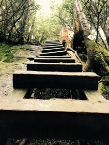 Daniel Boone Scout Trail - ladder