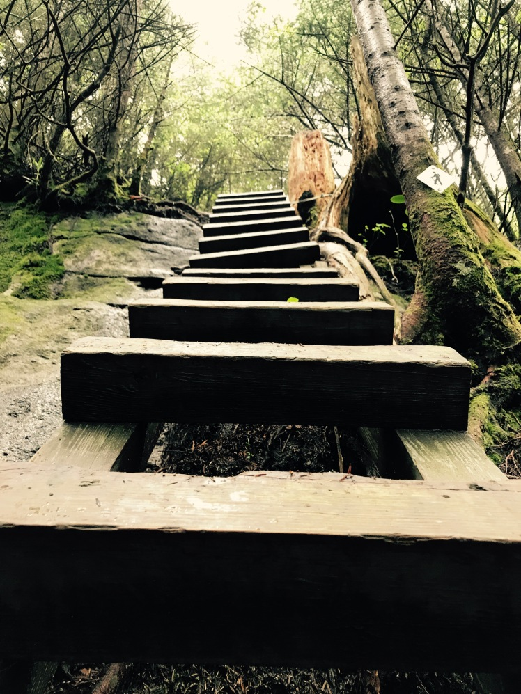Daniel Boone Scout Trail - ladder