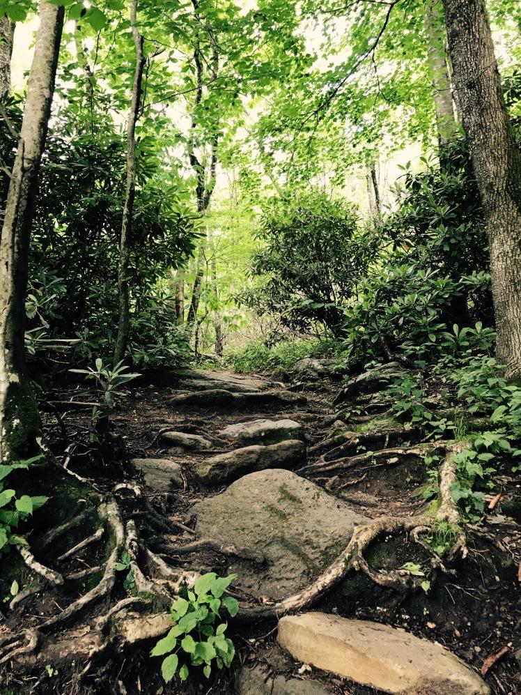 Daniel Boone Scout Trail - trail
