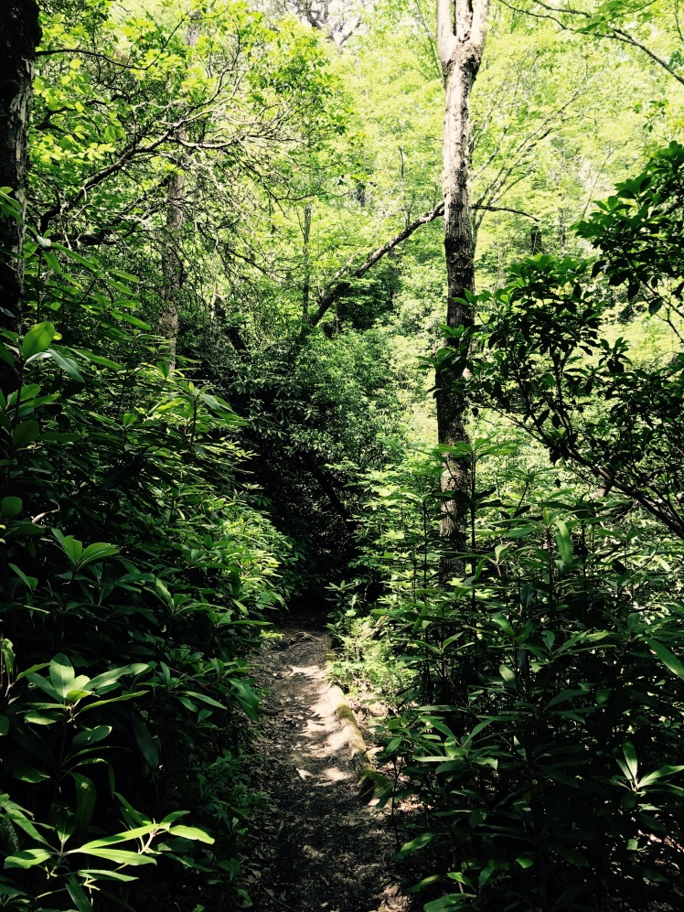 Mullinax Trail - trail