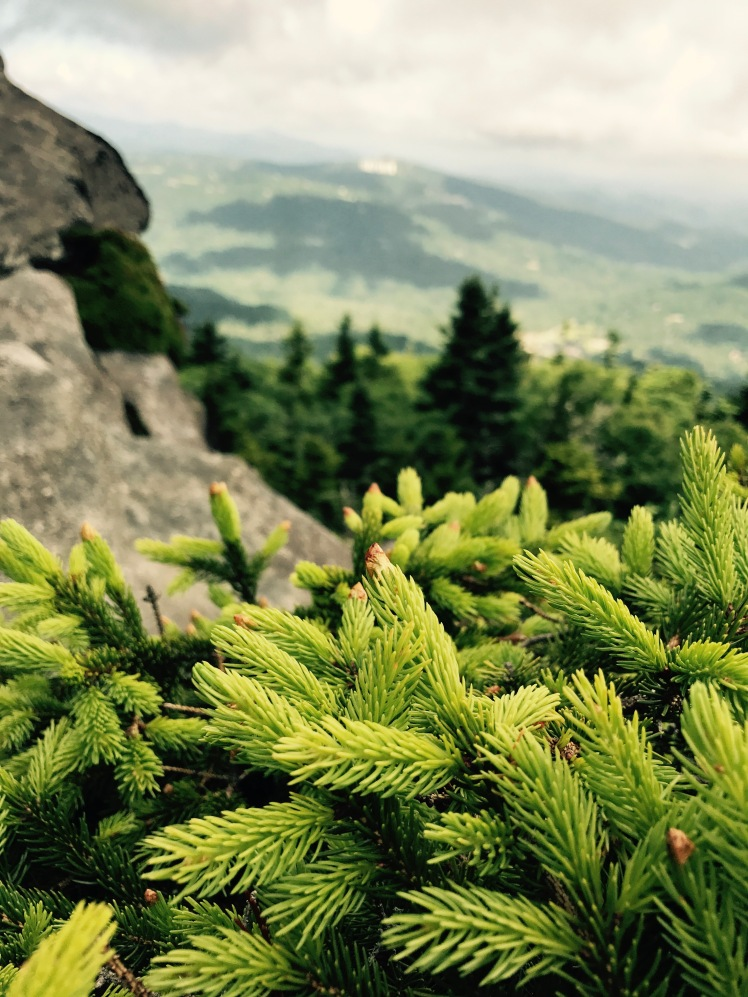 Grandfather Trail - fir