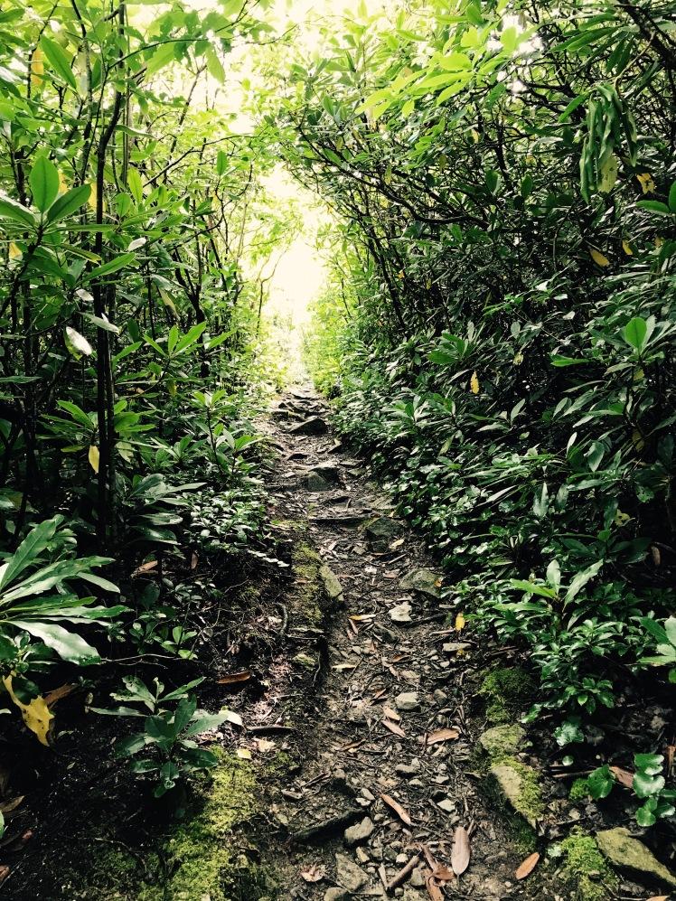 Cragway Trail - tunnel