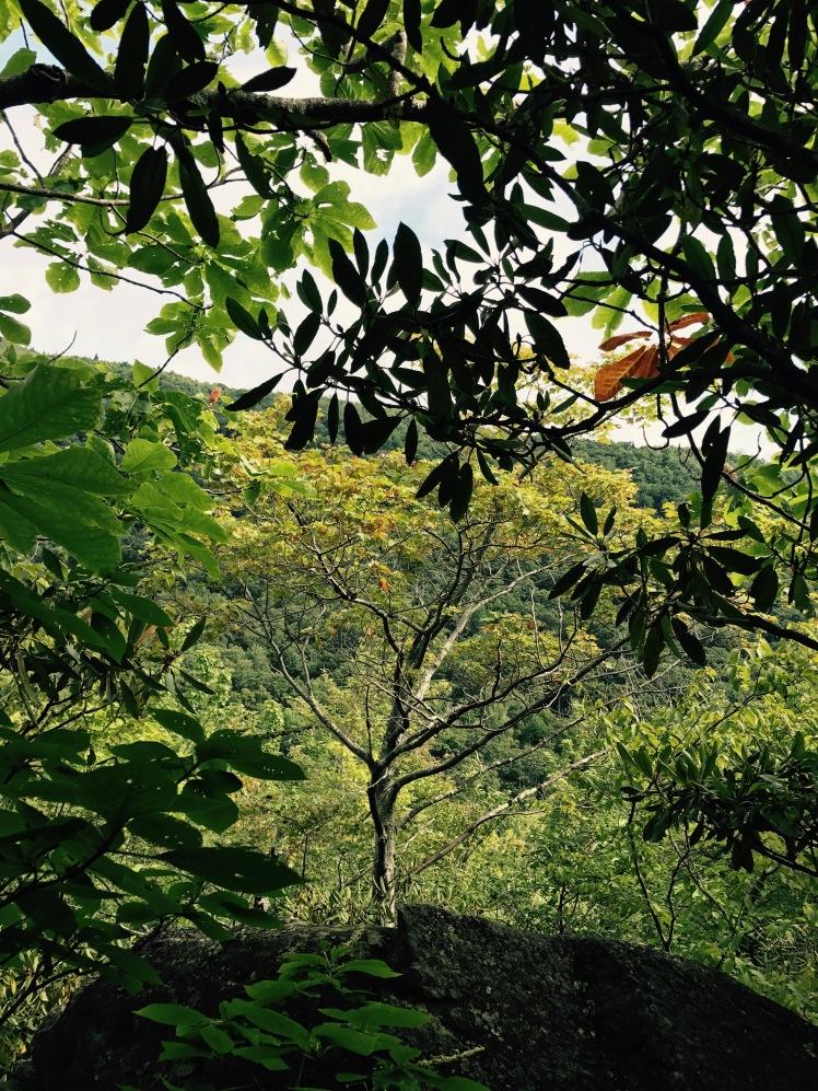 Cragway Trail - vista through trees