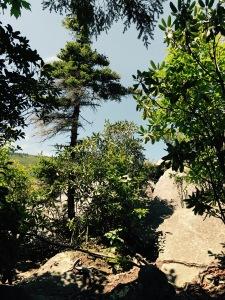 Storyteller's Rock - trees