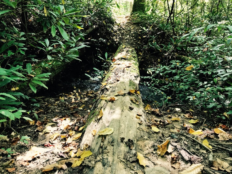 Cantrell Creek Trail - log crossing