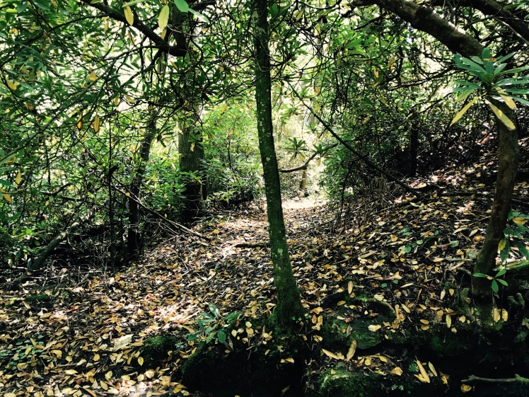 Poundingmill Trail - trail