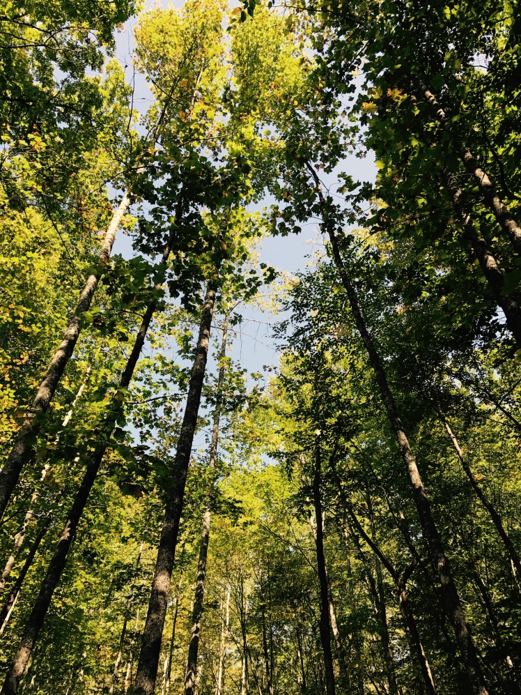 Poundingmill Trail - trees