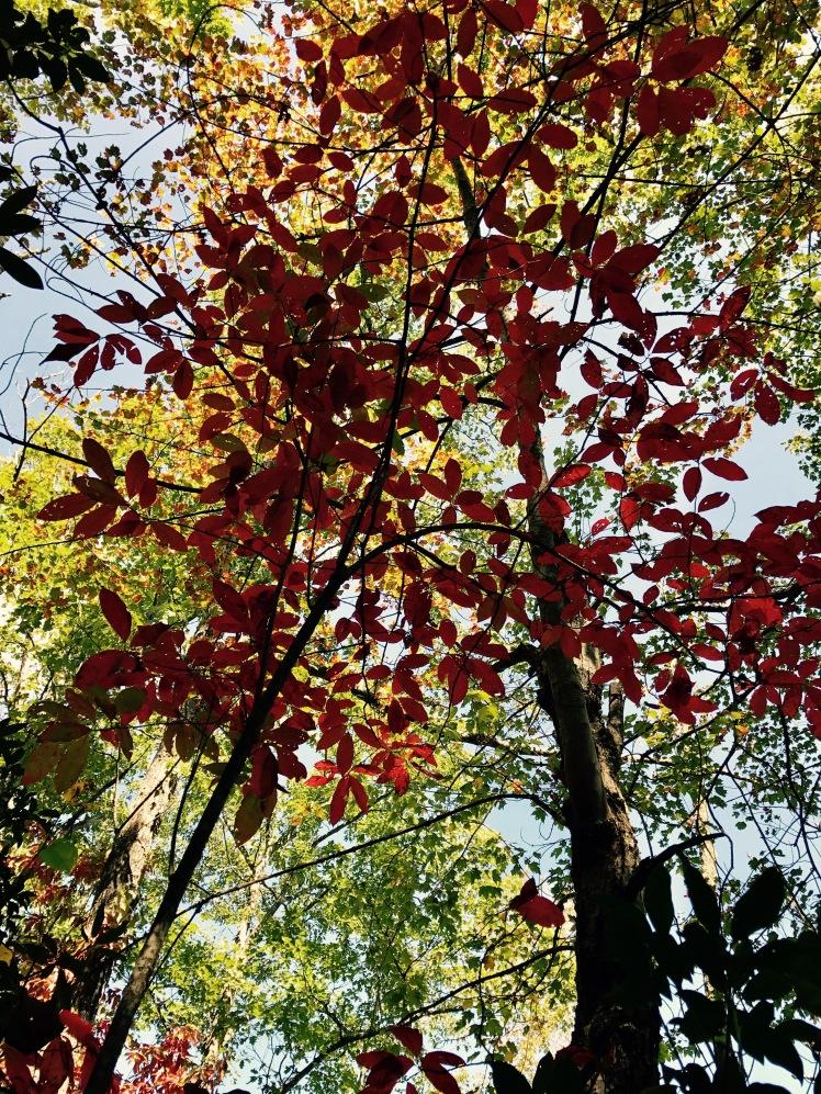 Squirrel Gap Trail - fall