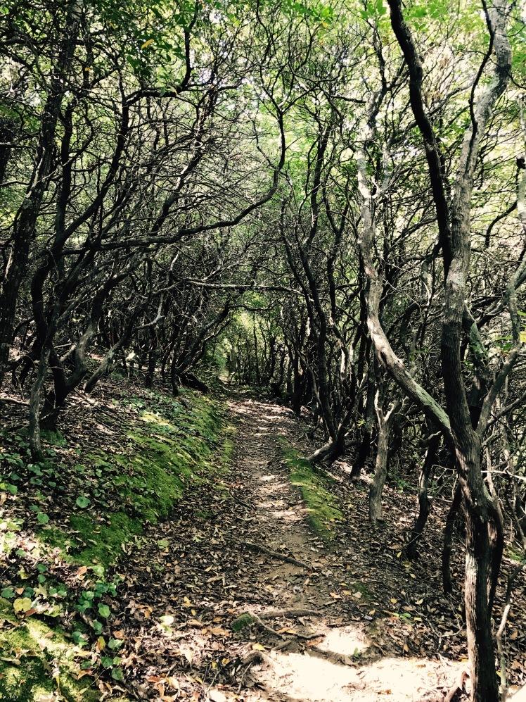 Squirrel Gap Trail - Laurel Gap