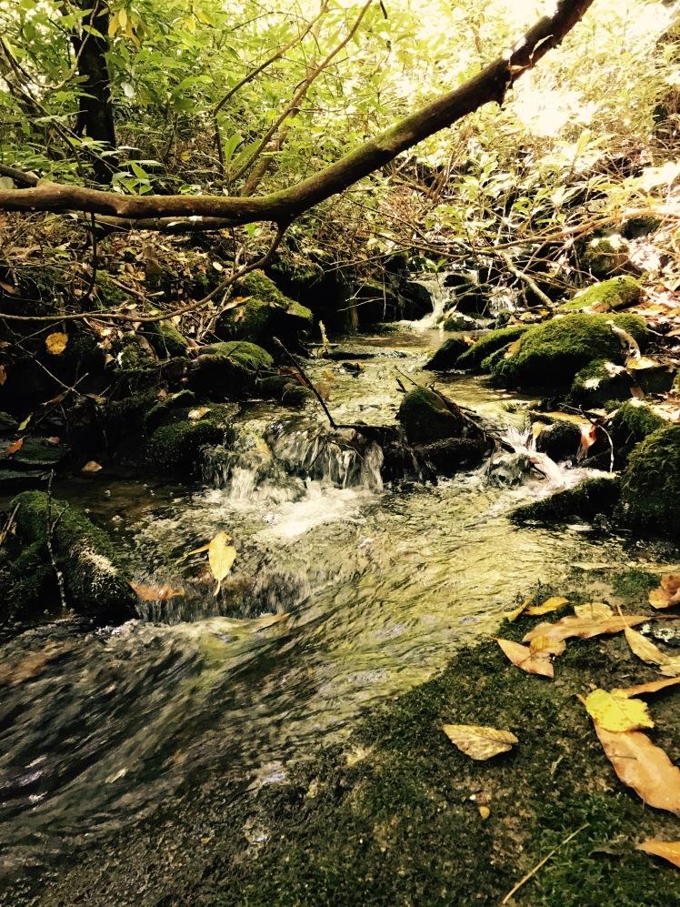 Wagon Road Gap Trail - creek