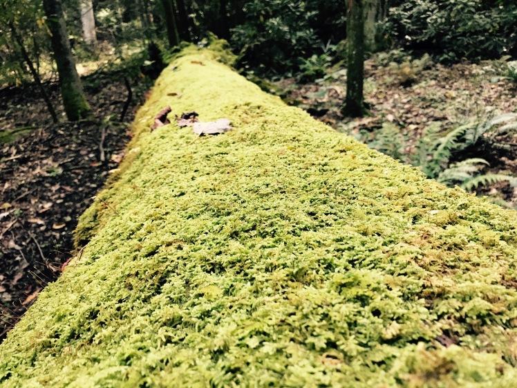 Wagon Road Gap Trail - moss on log