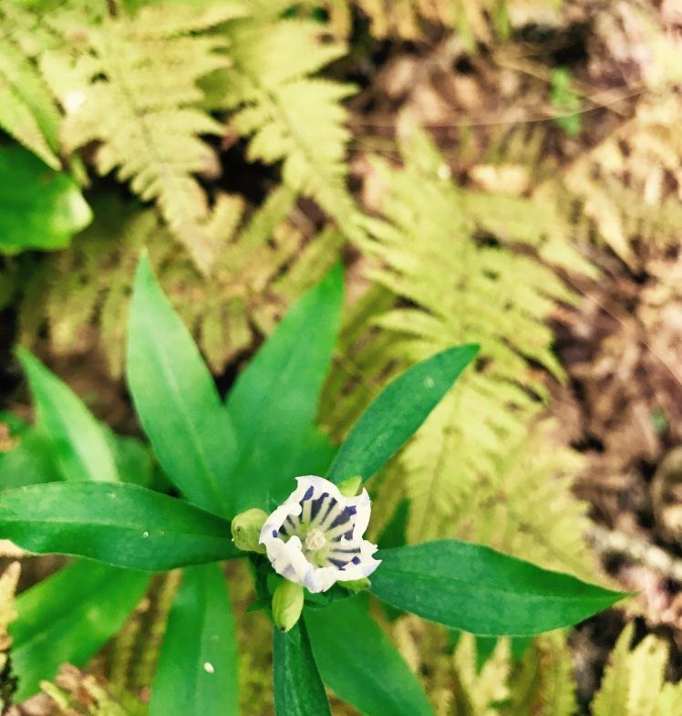 Wagon Road Gap Trail - flower