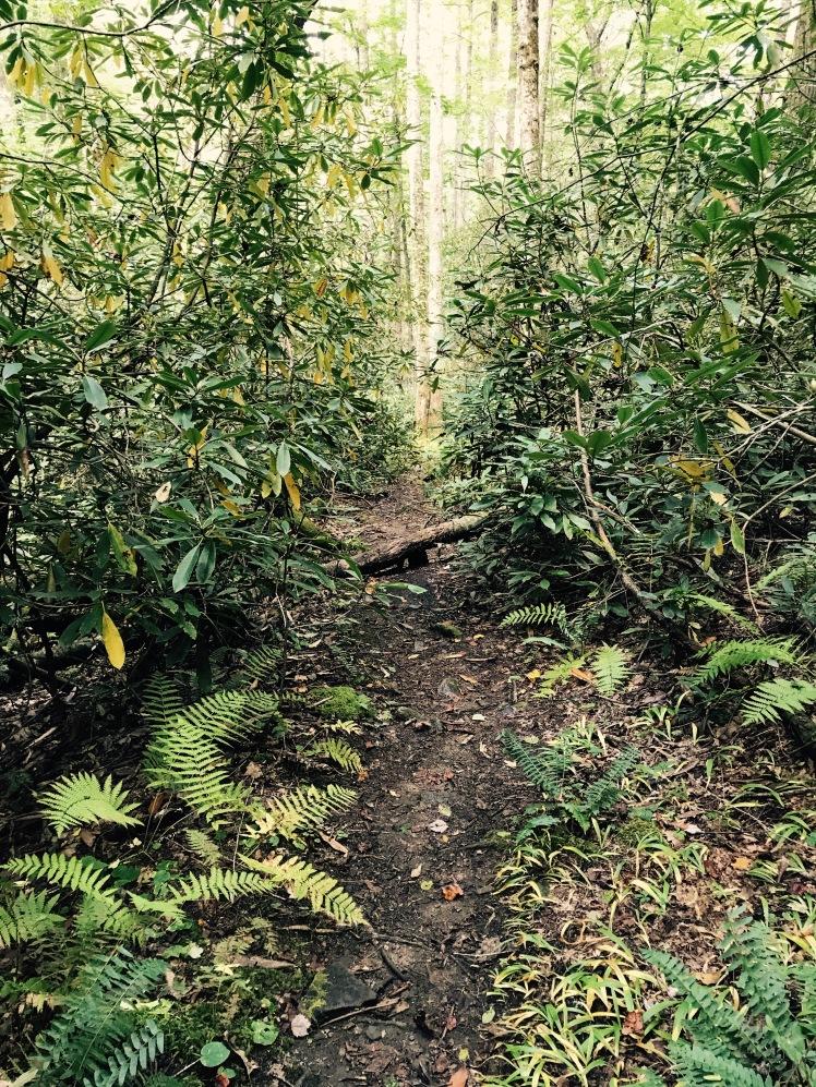 Wagon Road Gap Trail - trail