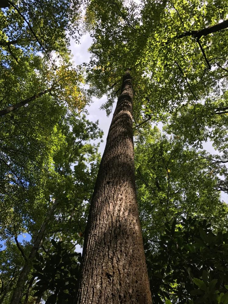 Wagon Road Gap Trail - tree