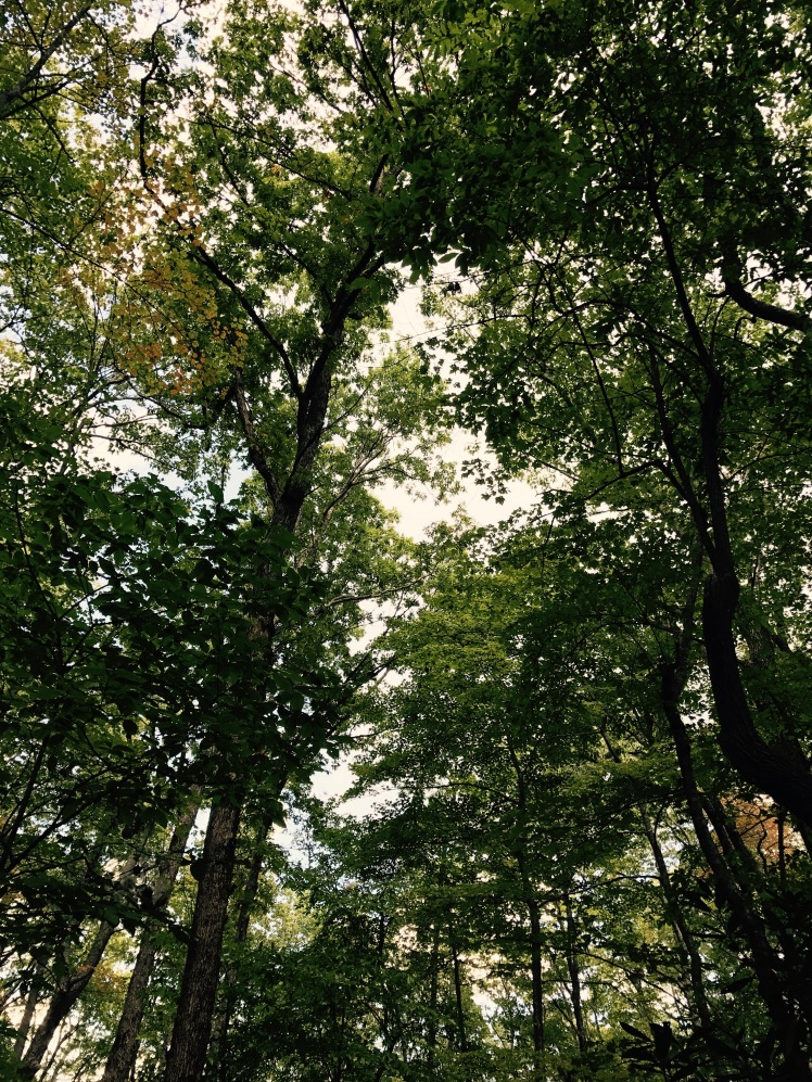 Wagon Road Gap Trail - trees