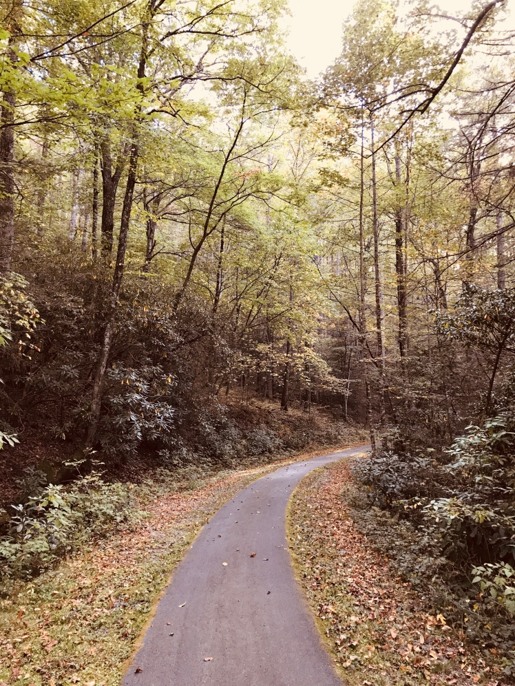 Forest Discovery Trail - trail