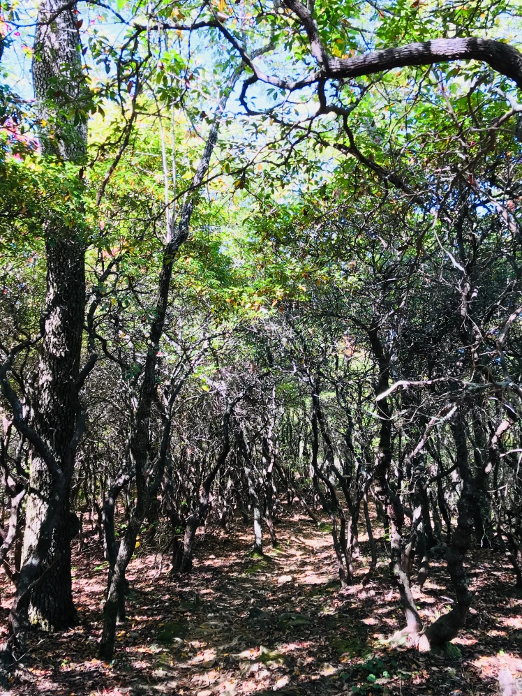 Horse Cove Gap Trail