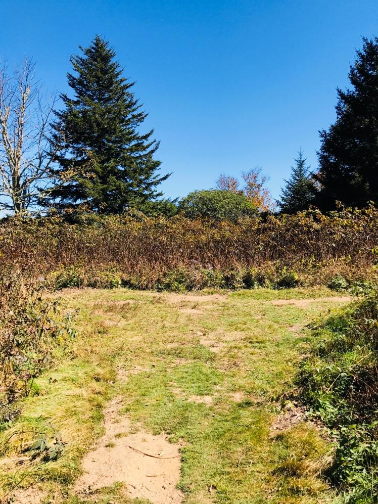 Little East Fork Trail - Shining Rock Gap