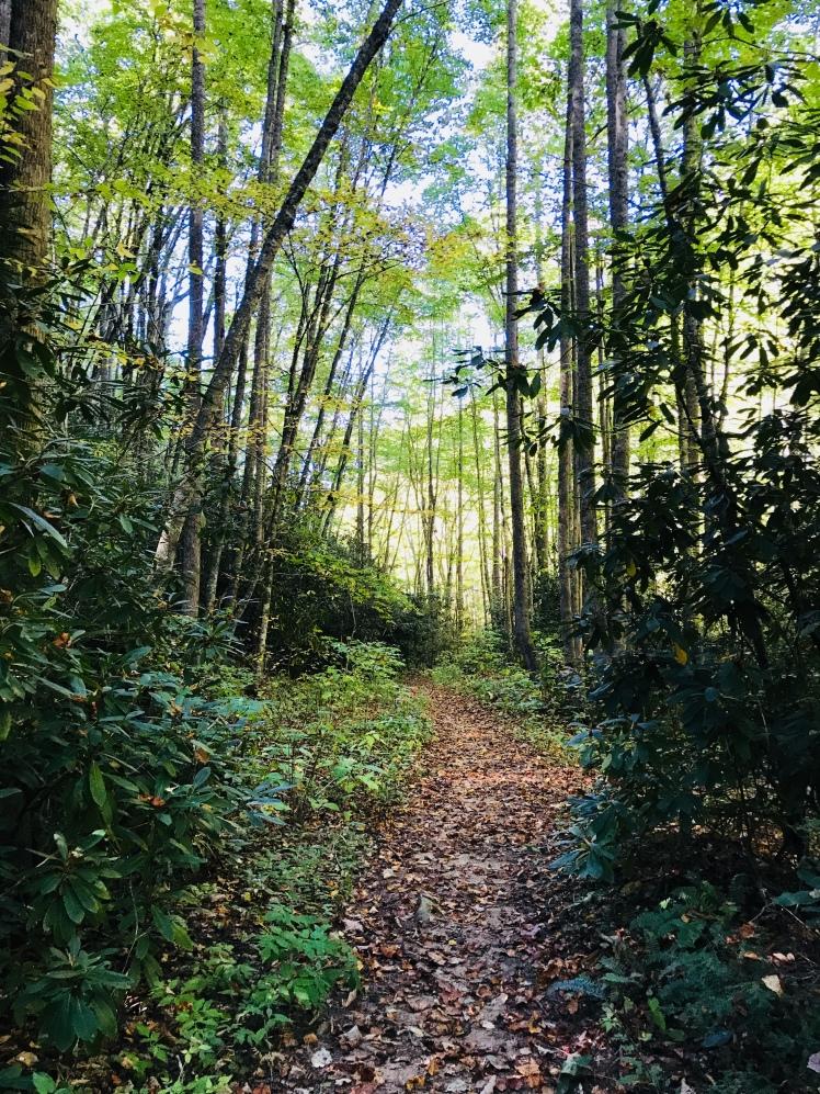 Little East Fork Trail