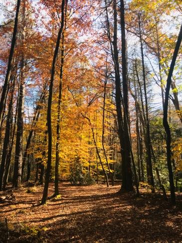 Bradley Creek Trail