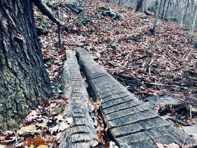Buck Spring Trail - log bridge
