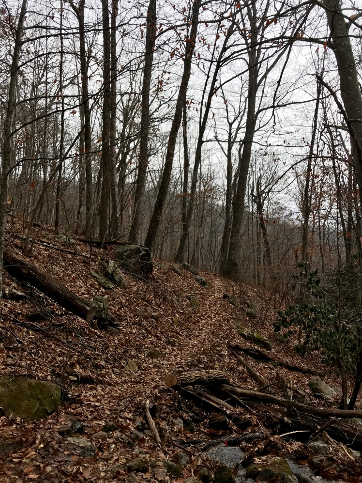 Buck Spring Trail - trail in woods