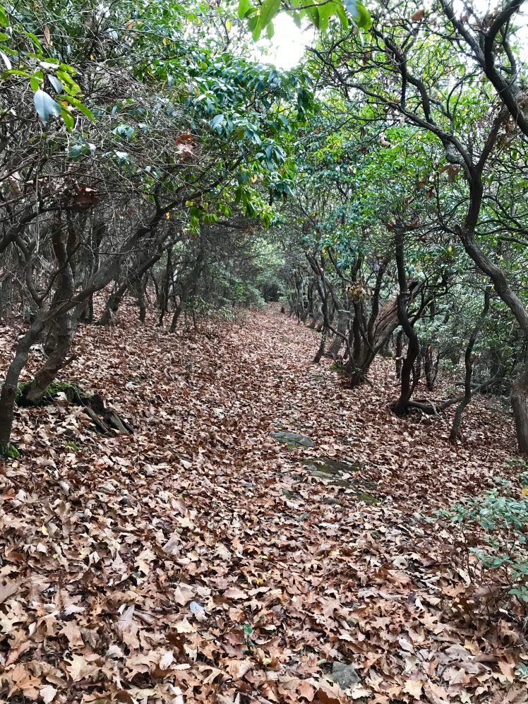 Buck Spring Trail - trail