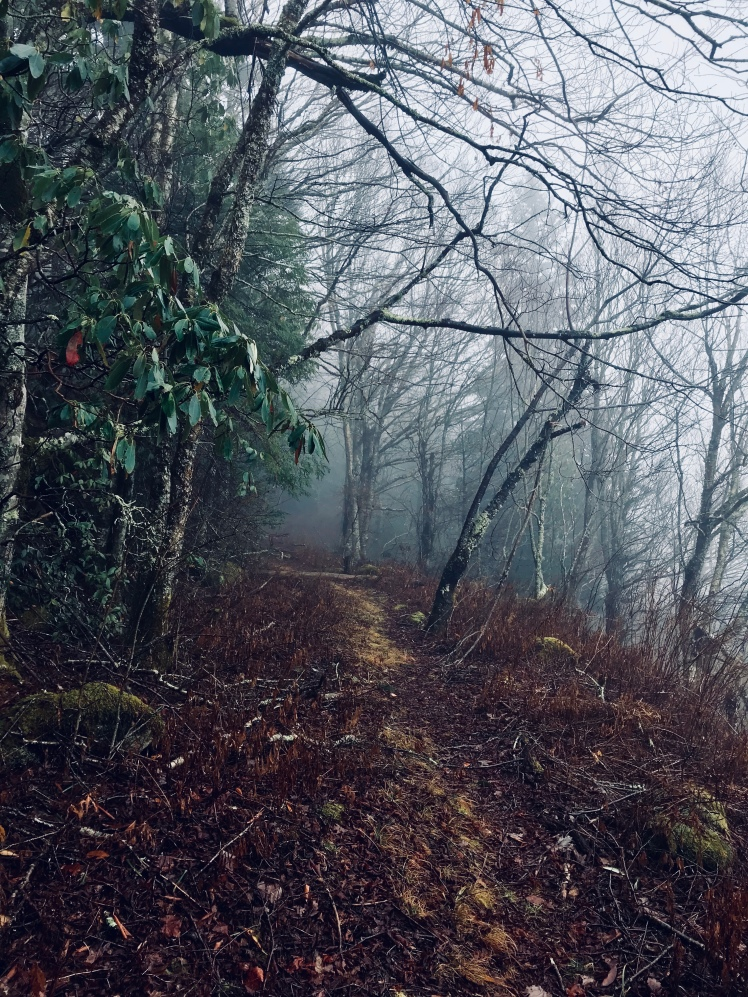 Fork Mountain Trail - trail in fog