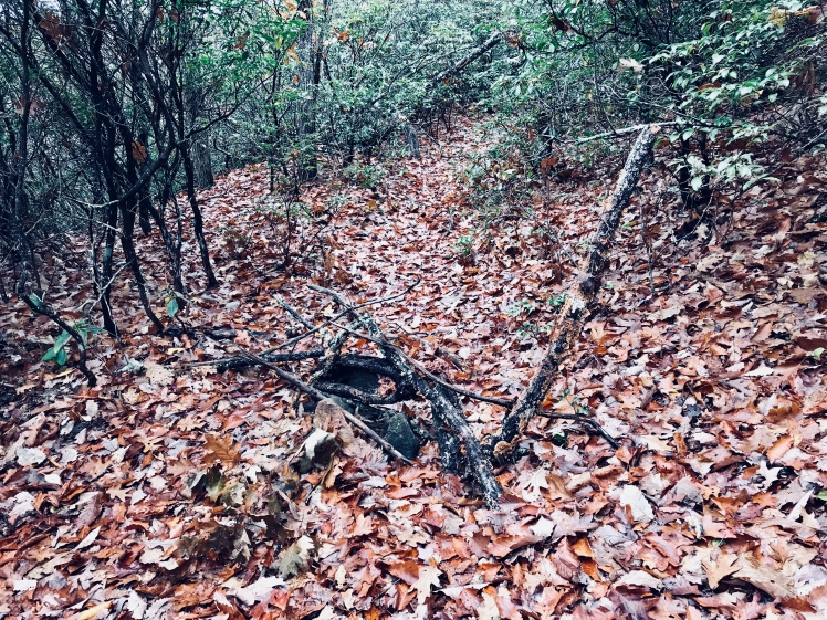 Fork Mountain Trail - turn near Cold Mountain Game Lands
