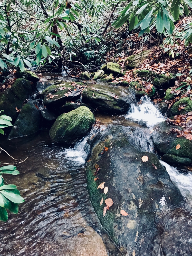 Fork Mountain Trail - Turnpike Creek
