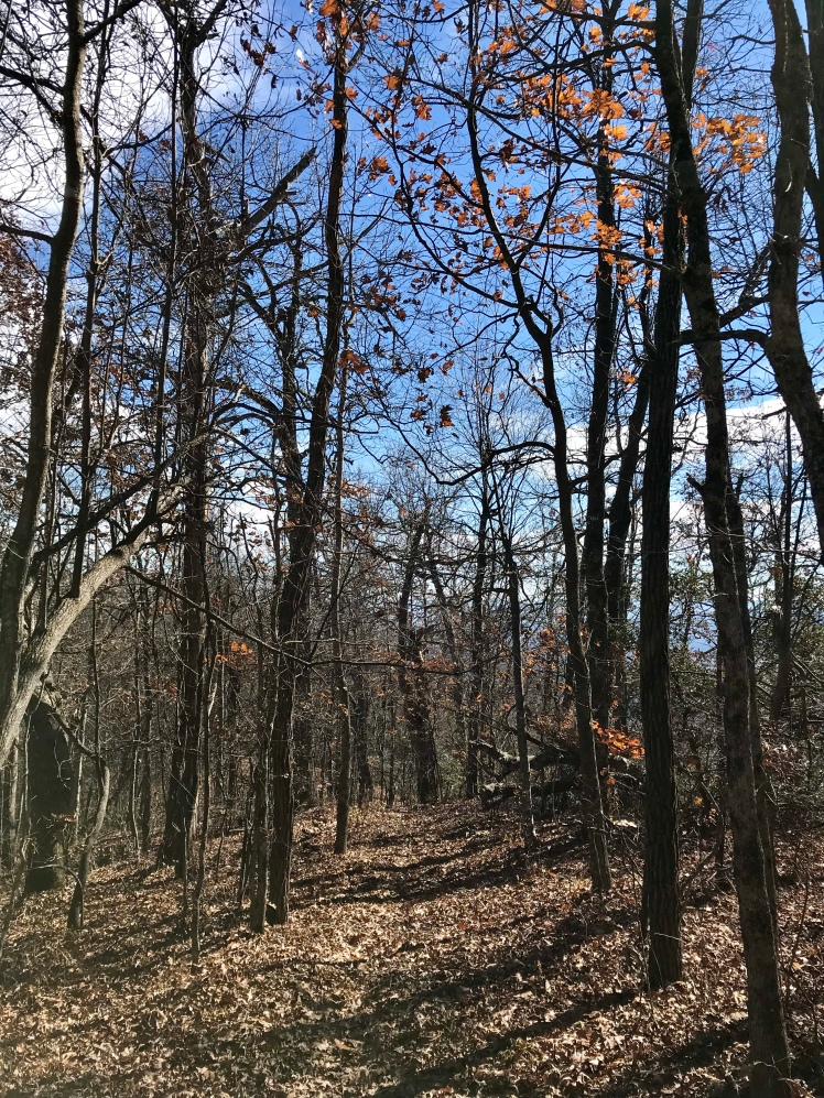 Shut-In Trail - trail in woods