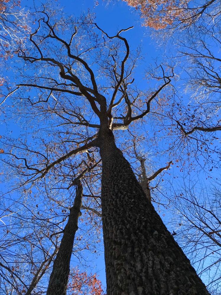 Shut-In Trail - tree