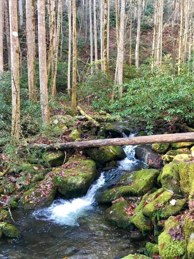 Chestnut Branch Trail - creek