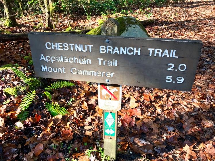 Chestnut Branch Trail - trailhead